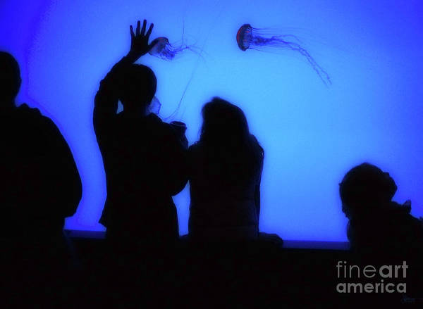 Photograph - Watching Jellyfish by Jeff Breiman
