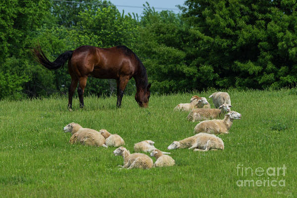 Wall Art - Photograph - Watching Over His Sheep by Jennifer White