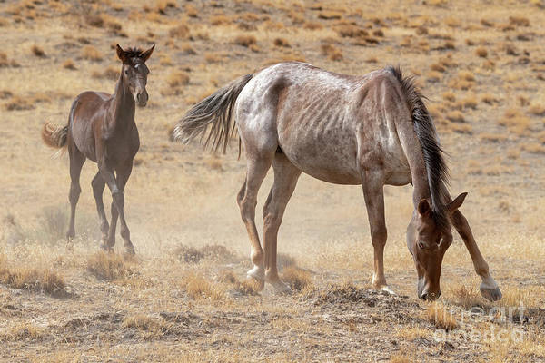 Wall Art - Photograph - Watching Over The Colt by Mike Dawson