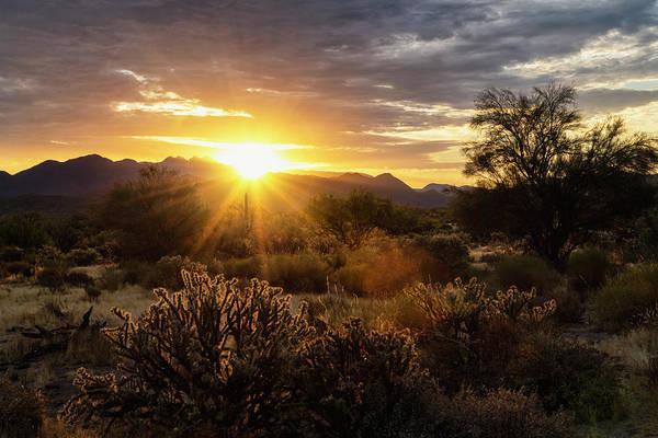 Wall Art - Photograph - Watching The Sun Rise In The Sonoran  by Saija Lehtonen