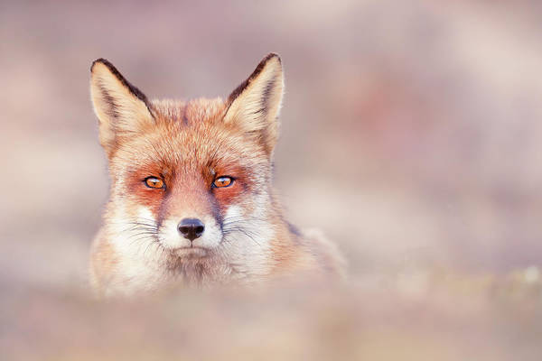 Chilling Photograph - Watching The Watcher by Roeselien Raimond