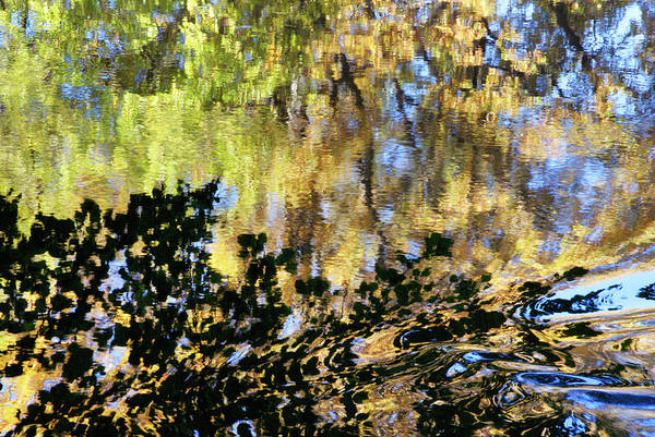 Photograph - Water And Leaves by Cate Franklyn