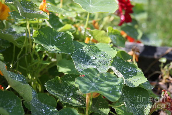 Photograph - Water Beads After The Summer Rain by Tatiana Travelways
