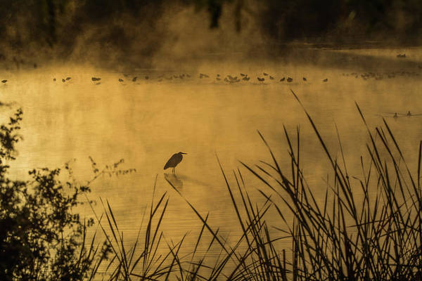 Photograph - Water Birds In The Mist 3107-120318-1 by Tam Ryan