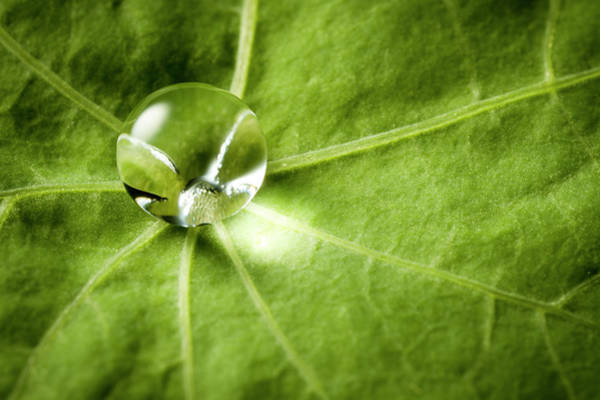 Environmental Issues Photograph - Water Drop On Green Leaf by Thomasvogel