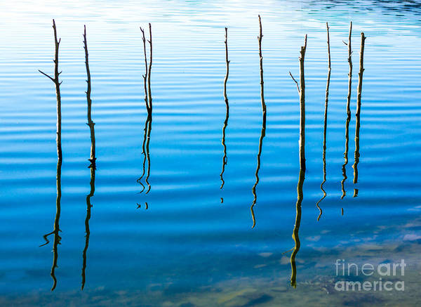 Beauty In Nature Wall Art - Photograph - Water Landscape With Trees by Jannine Mcfarlane
