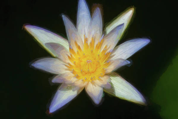 Photograph - Water Lily 100 by Rich Franco