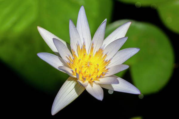 Photograph - Water Lily 102 by Rich Franco