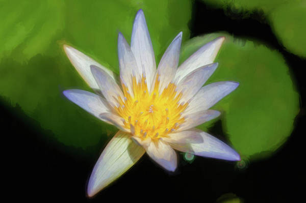 Photograph - Water Lily 105 by Rich Franco