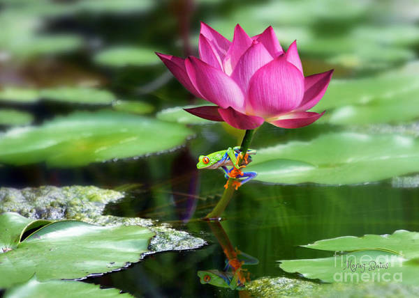 Mixed Media - Water Lily And Little Frog by Morag Bates