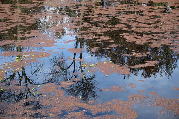 Photograph - Water Reflection_svrp_1056_18 by Tari Kerss