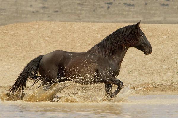 Photograph - Water Run by Kent Keller