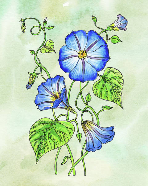 Painting - Watercolor Blue Morning Glory Flower Botanical  by Irina Sztukowski