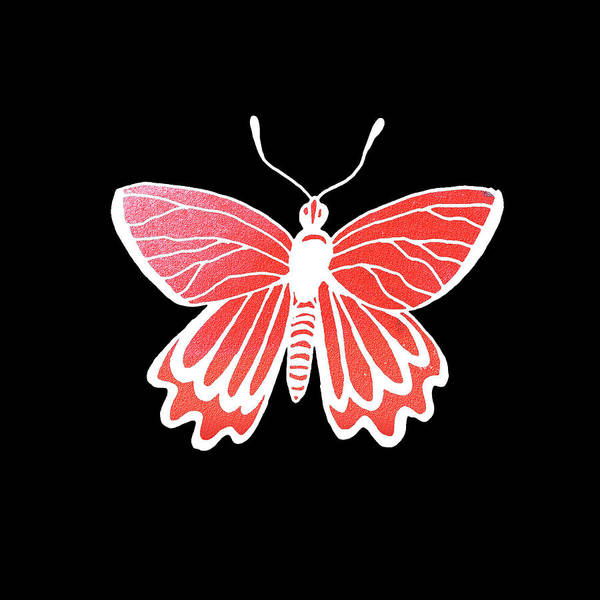 Painting - Watercolor Butterfly On Black Iv by Irina Sztukowski