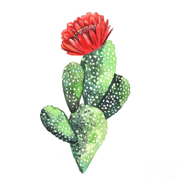 Wall Art - Digital Art - Watercolor Cactus. Original Watercolor by Yudina Anna