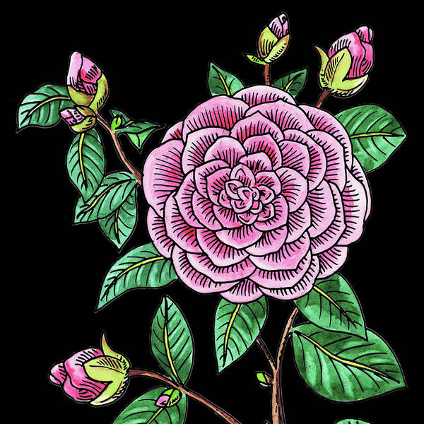 Line Drawing Painting - Watercolor Flower Japanese Camellia by Irina Sztukowski