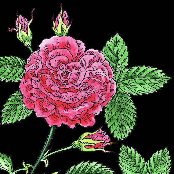 Wall Art - Painting - Watercolor Flower Pink French Rose by Irina Sztukowski