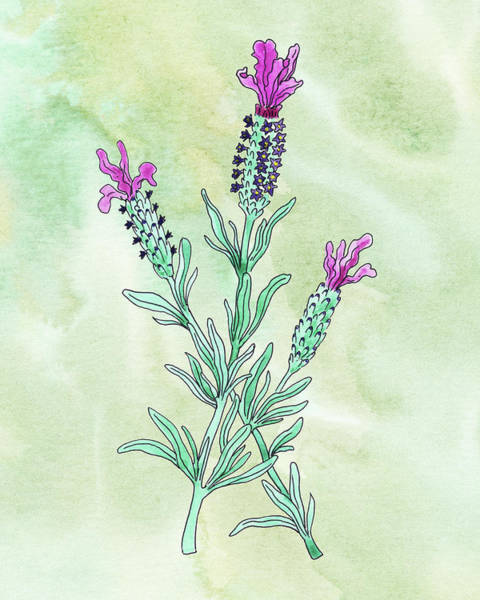 Botanic Painting - Watercolor French Lavender Botanical  by Irina Sztukowski