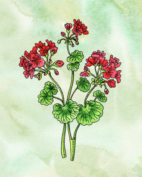 Red Geraniums Wall Art - Painting - Watercolor Geranium Flower Botanical  by Irina Sztukowski