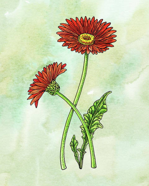 Wall Art - Painting - Watercolor Gerbera Daisy Botanical by Irina Sztukowski