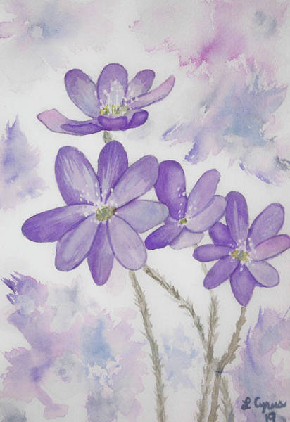 Painting - Watercolor - Hepatica Wildflowers by Cascade Colors