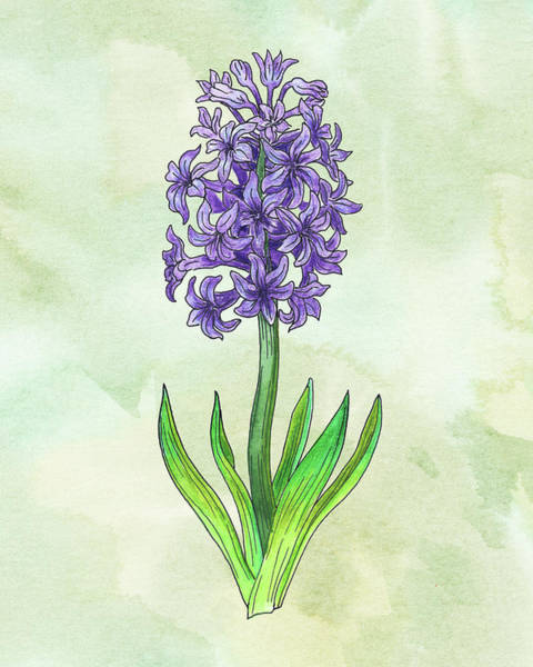 Painting - Watercolor Hyacinth Flower Botanical by Irina Sztukowski
