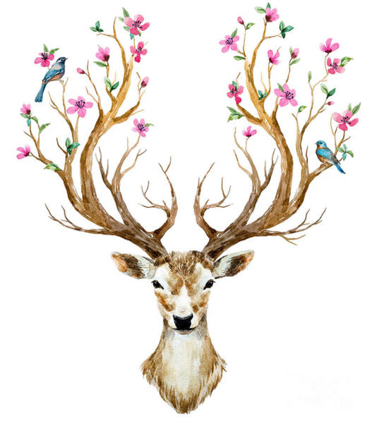 Wall Art - Digital Art - Watercolor Illustration Isolated Deer by Anastasia Lembrik