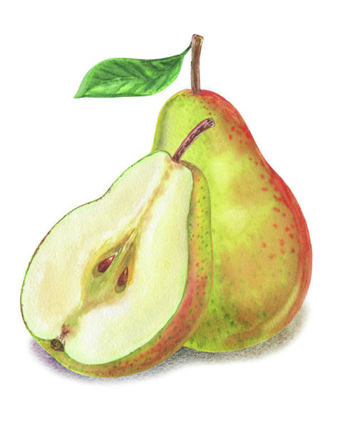 Painting - Watercolor Illustration Of Whole And Cut Pear by Irina Sztukowski