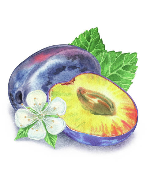 Painting - Watercolor Illustration Of Whole And Half Plum by Irina Sztukowski