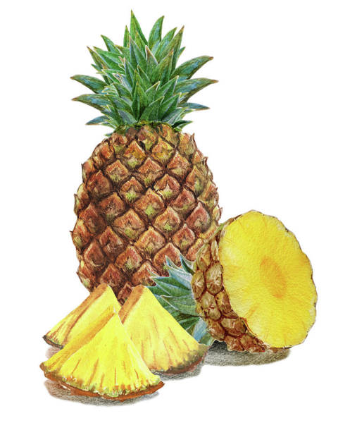 Painting - Watercolor Illustration Of Whole And Sliced Pineapple by Irina Sztukowski