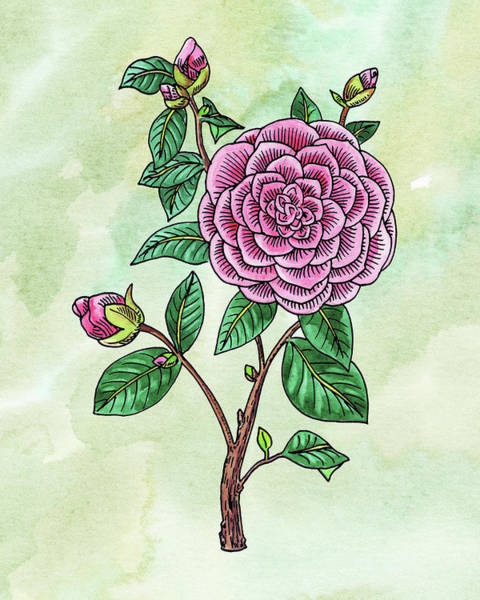 Botanic Painting - Watercolor Japanese Camellia Flower  by Irina Sztukowski