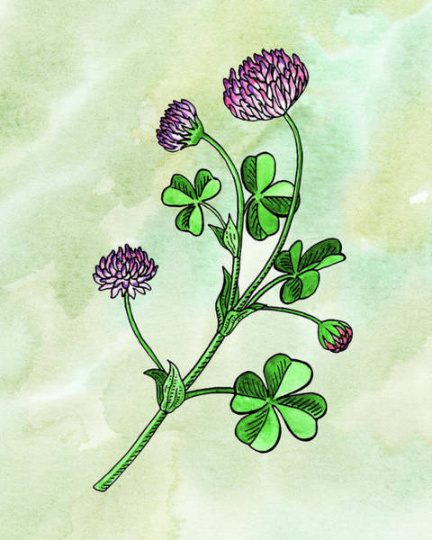 Wall Art - Painting - Watercolor Lucky Clover Flower Botanical  by Irina Sztukowski