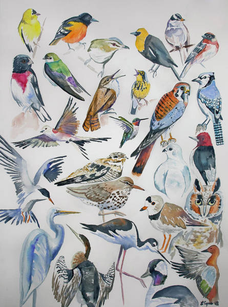 Painting - Watercolor - North American Birds by Cascade Colors