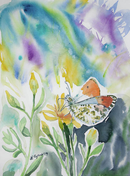 Painting - Watercolor - Orange-tip Butterfly With Wildflower by Cascade Colors