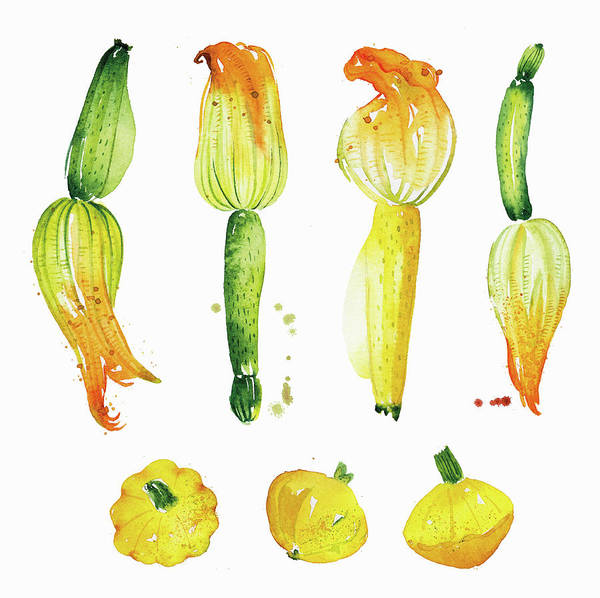 Wall Art - Painting - Watercolor Painting Of Courgettes by Ikon Images