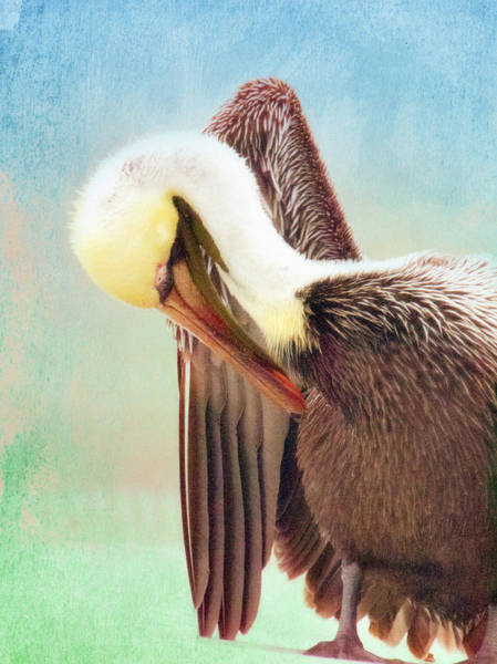 Photograph - Watercolor Pelican by Andrea Layne