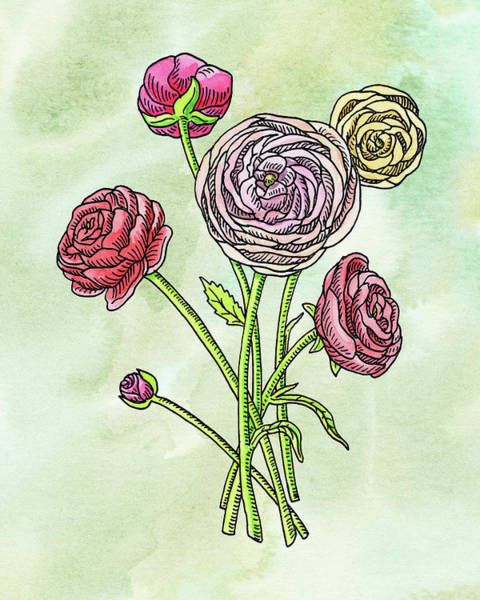 Painting - Watercolor Ranunculus Botanical Flowers by Irina Sztukowski