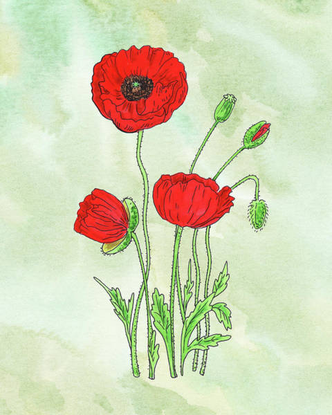 Wall Art - Painting - Watercolor Red Poppy Flower Botanical  by Irina Sztukowski