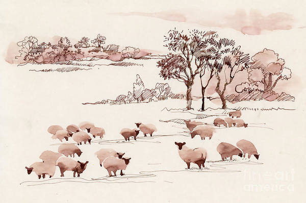 Wall Art - Digital Art - Watercolor Summer Landscape With Sheep by Kostanproff
