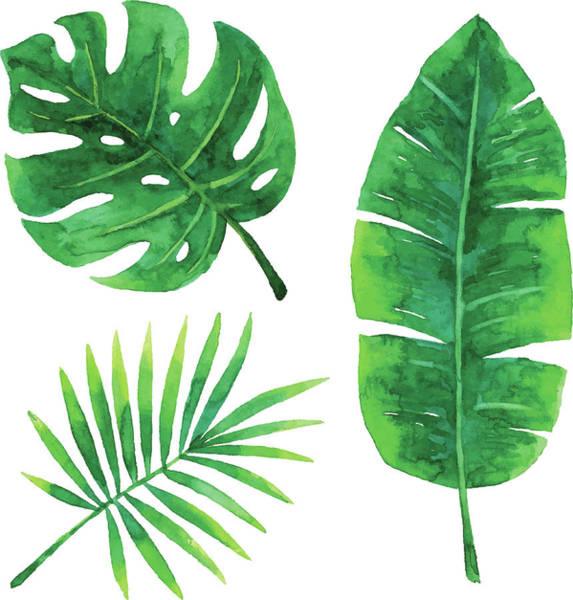 Digital Art - Watercolor Tropical Leaves by Saemilee