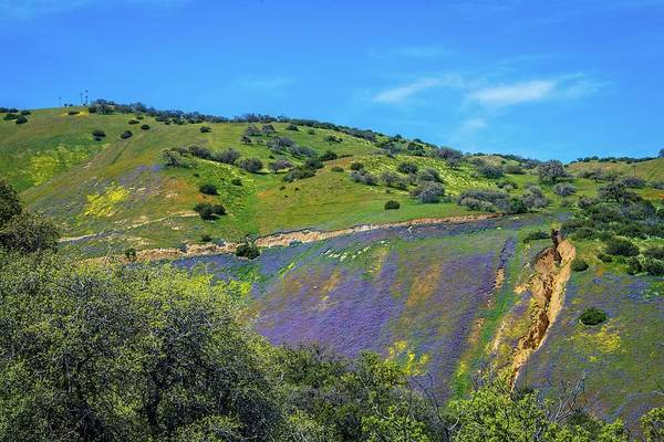 Photograph - Wildflower Waterfall - Superbloom 2019 by Lynn Bauer