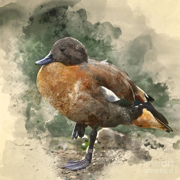 Waterfowl Wall Art - Digital Art - Watercolour Painting Image Of Beautiful by Matt Gibson