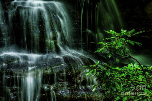 Photograph - Waterfall And Rhododendron, Light And Shadow by Thomas R Fletcher