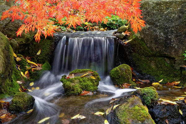 Photograph - Waterfall At The Garden by Peter Ponzio