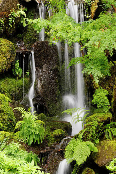 Wall Art - Photograph - Waterfall At The Portland Japanese by Adam Jones