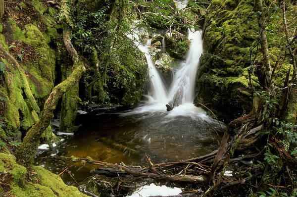 Wall Art - Photograph - Waterfall by David Hosking