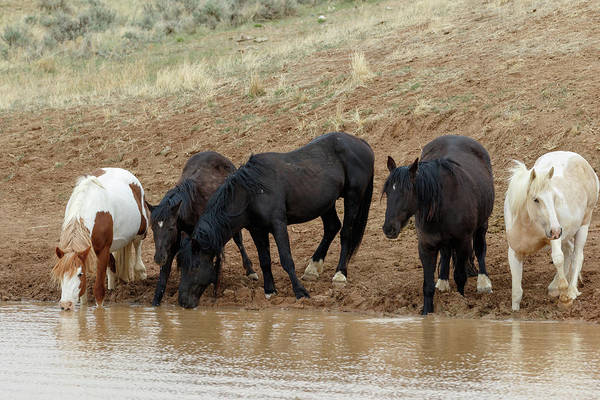 Photograph - Watering Hole by Ronnie and Frances Howard