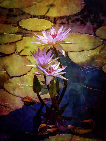 Photograph - Waterlily Bouquet 2922 Idp_6 by Steven Ward