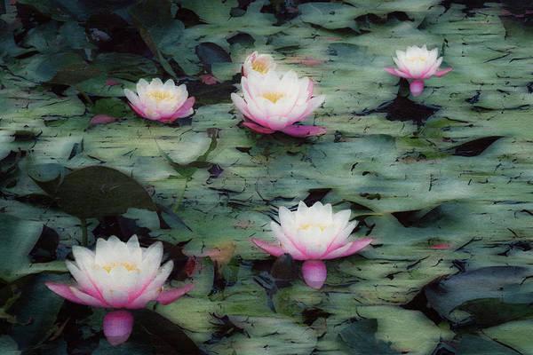 Photograph - Waterlily Impressions by Dirk Wuestenhagen