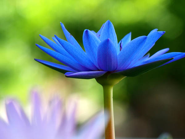Wall Art - Photograph - Waterlily by Lobsterbig
